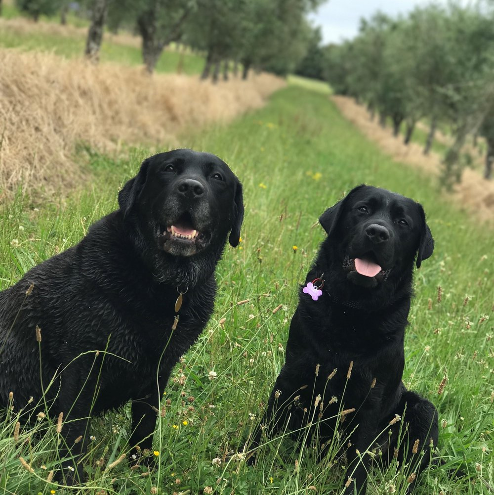 The Two Black Dogs - Joey and Jett