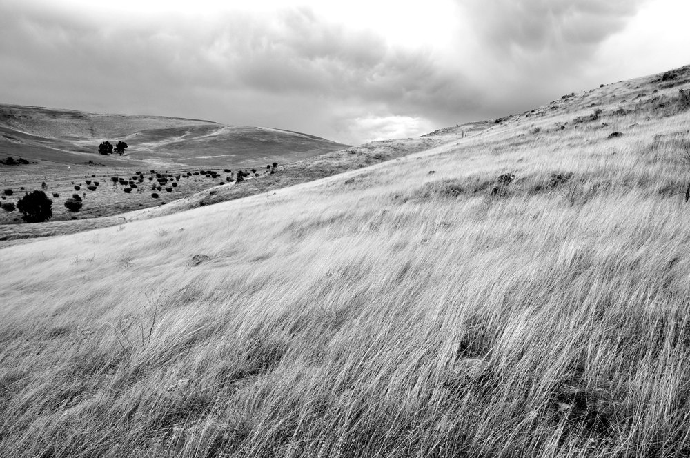 Palmer_Landscape_2.jpg
