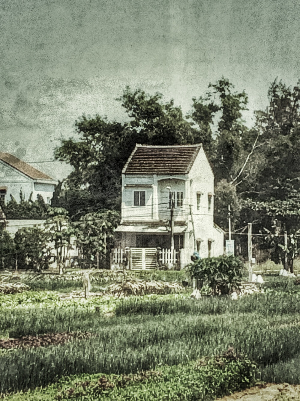 House in  Hoi An vegetable and herb garden                                   © Neil Cash
