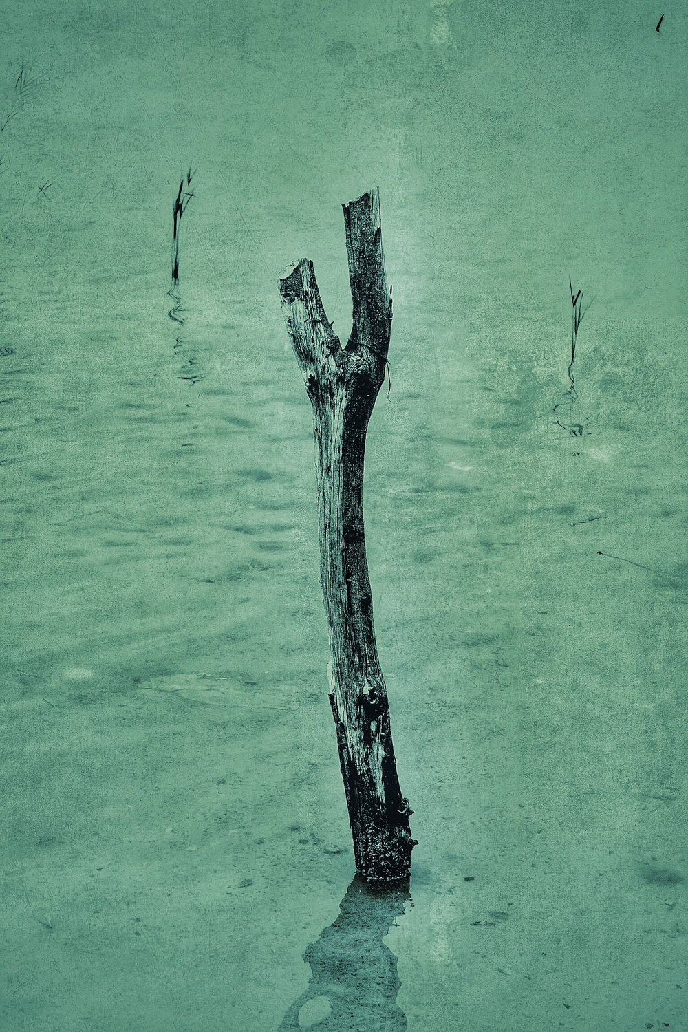 Just a good solid stick in the water    © Neil Cash