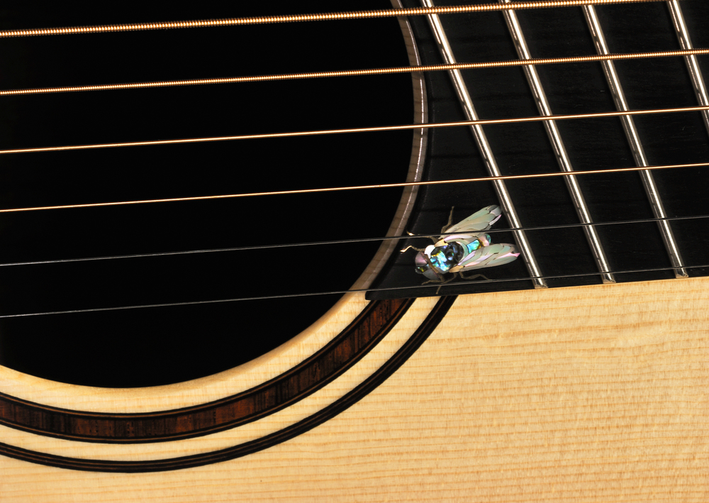 Traugott Model R Koa Fan Fret 7-string