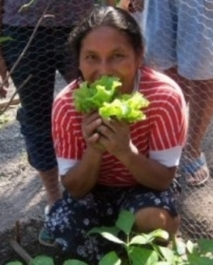 first harvest Dona Goya.JPG