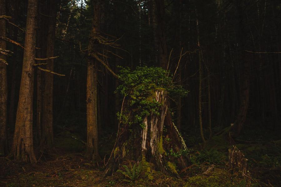 pnw oregon coast woods