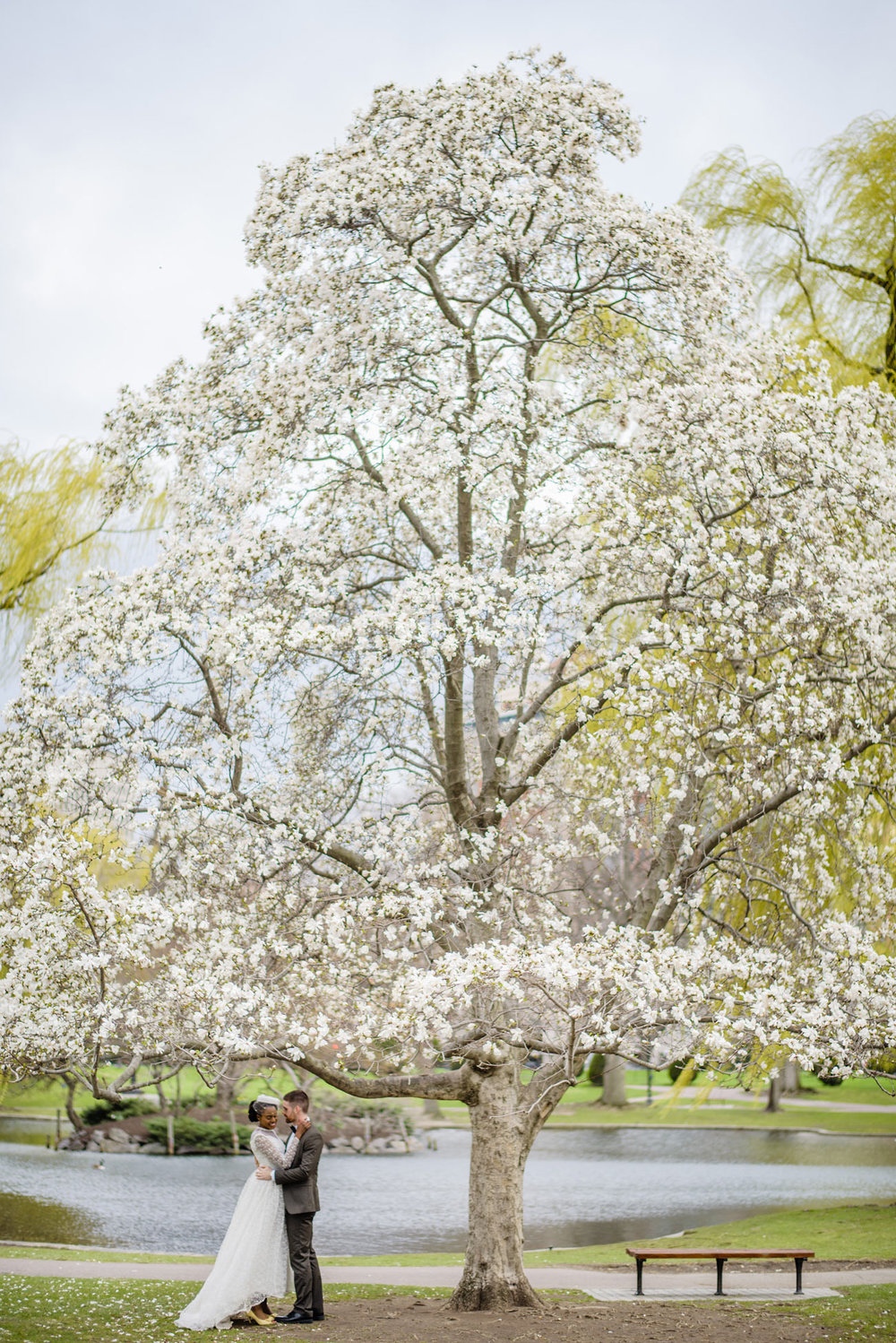 blooming cherry blossom tree in boston lifestyle wedding photographs at the public gardens