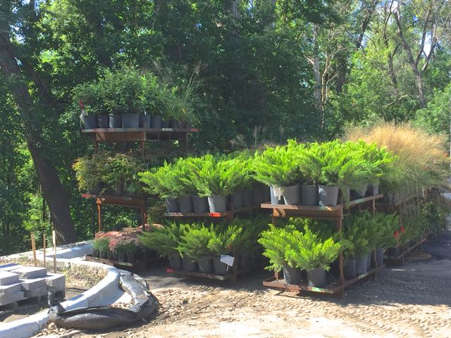 Pallets of plants are being delivered today in preparation for landscaping crews to start work on Wednesday. We're hoping that the rain forecasted for later this week passes us by, so planting can proceed unimpeded.