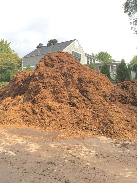 A giant load of mulch was delivered and piled in our east parking lot. Bobcats and wheelbarrows are being used to distribute portions around the site so that the landscaping crew can protect our newly planted beds.
