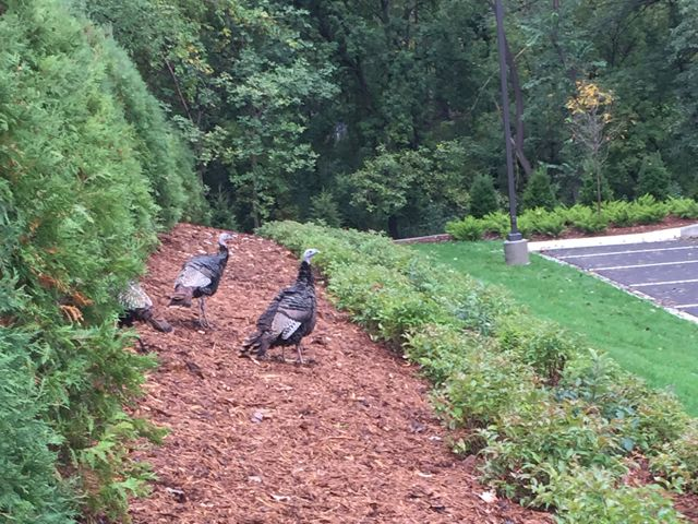 Today, some of our favorite neighborhood residents stopped by to check out the new landscaping.