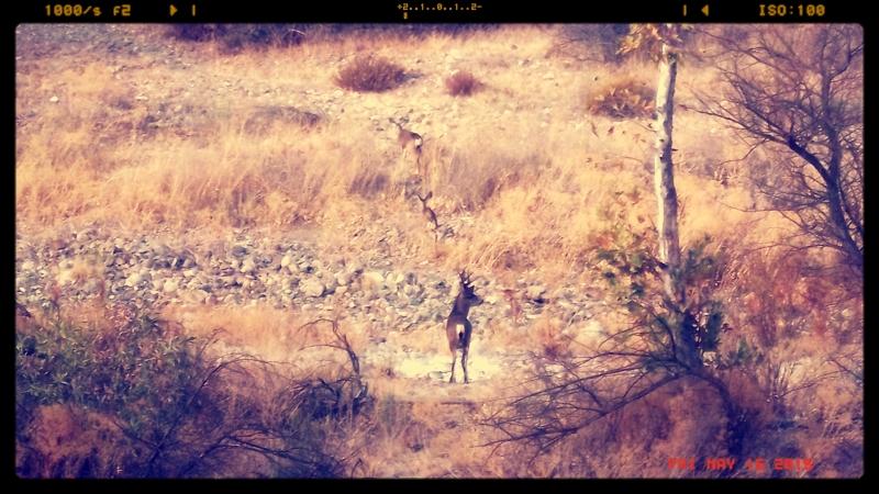 deer copy 2.JPG