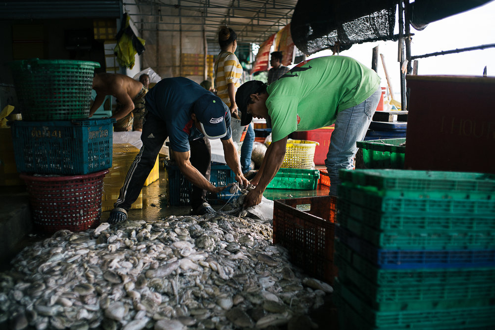 Middlemen measuring the weight of each batch of fishes before transporting them to the markets.