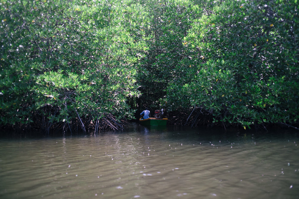 The mangrove networks are important in crab fishing because it protects the mud crab population from fast flowing water. But with deepening river beds, these mangroves are now threatened too and often gets eroded away into the river, jeopardising the entire ecosystem.