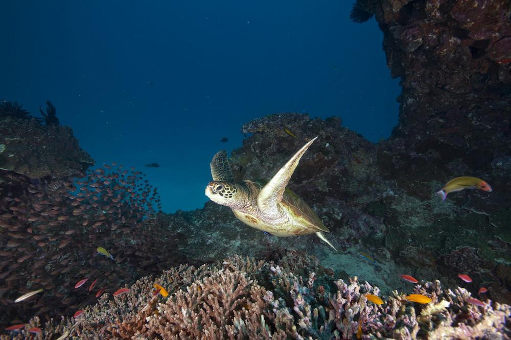 观赏大堡礁 - 昆士兰州 -