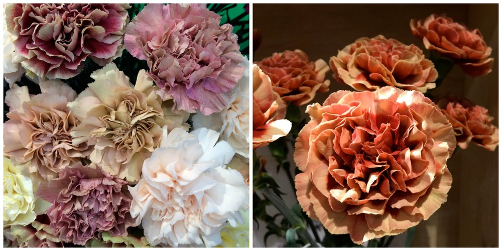 That middle carnation in the left picture is a dead ringer for Pantone's Spring 2015 pick: Toasted Almond. Pictures courtesy of Alicia at http://flirtyfleurs.com.