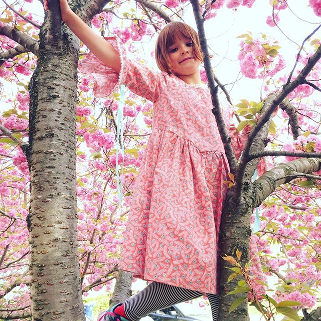 #throwbackthursday when your child dresses up in 1870's dress handmade by #goga sister @viennaviennavienna for spirit week at school and then she has gotta climb cherry blossoms #camouflage in pink. #whodathunk