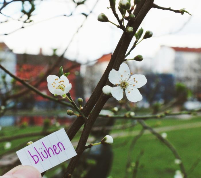 to blossom.jpg