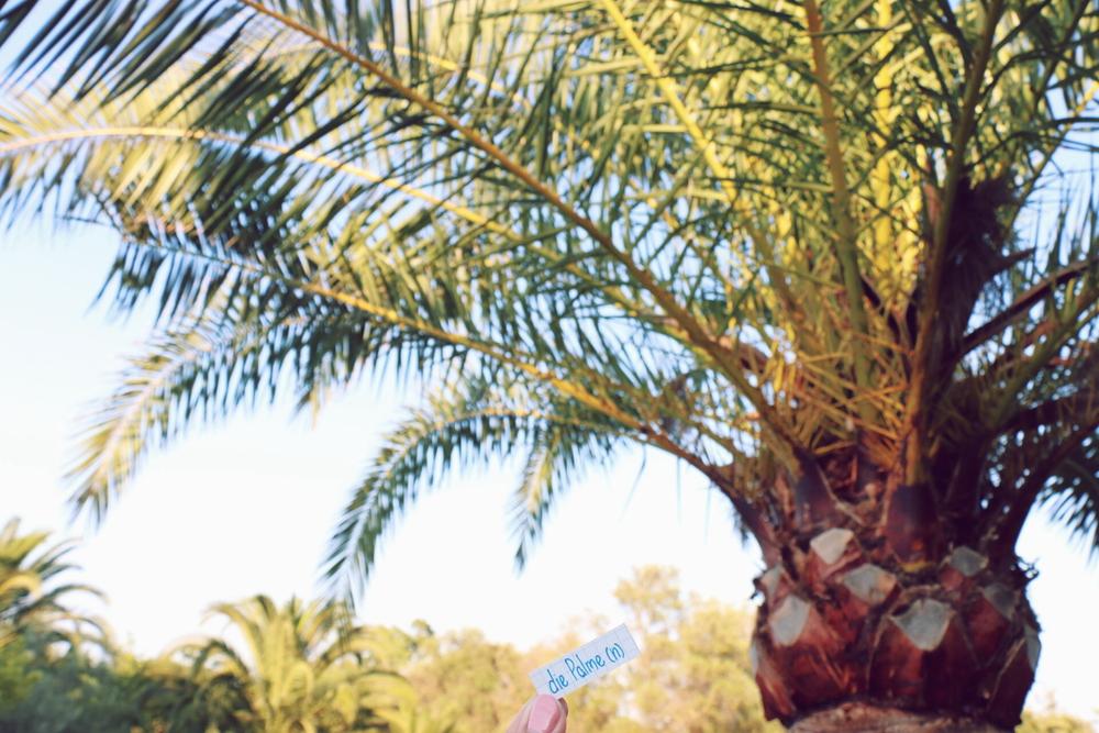 die Palme