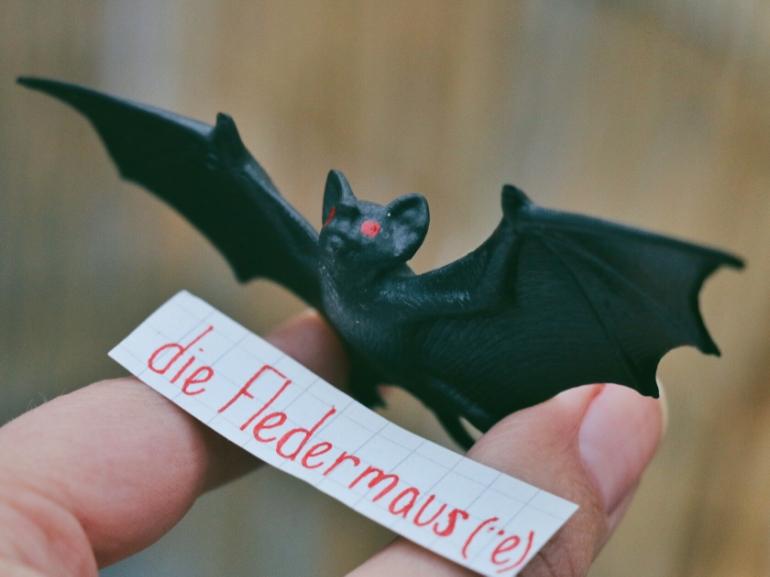 die Fledermaus - bat