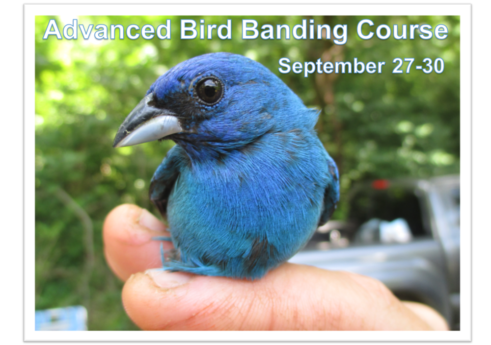 Advanced Bird Banding Course.png