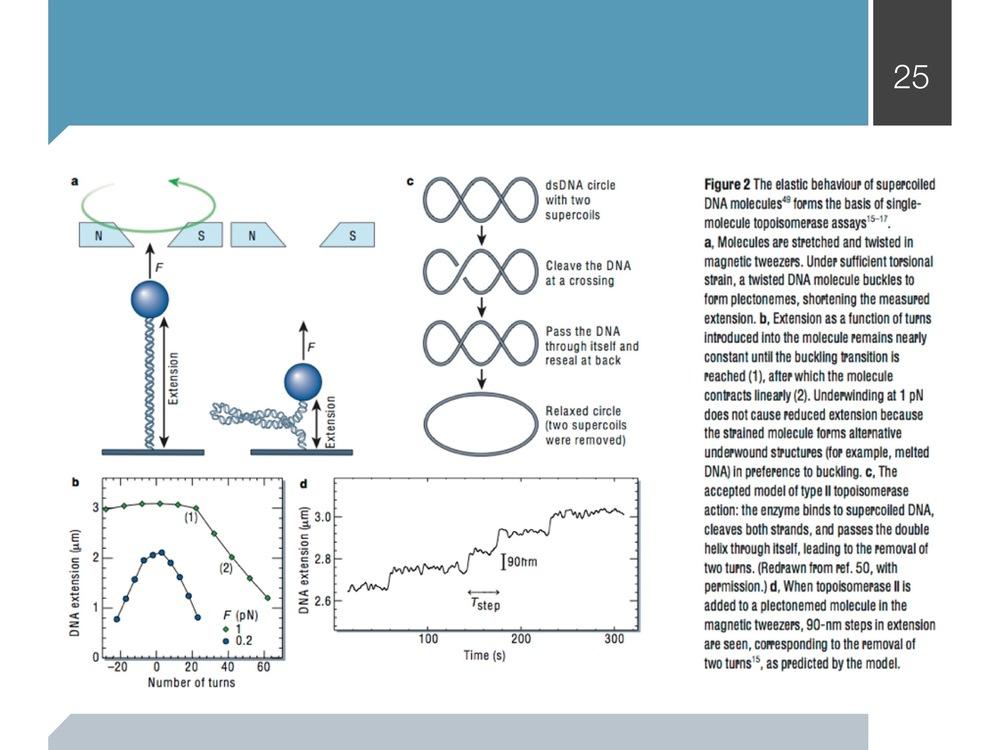 magnetic-tweezers_presentation 32 copy.jpeg
