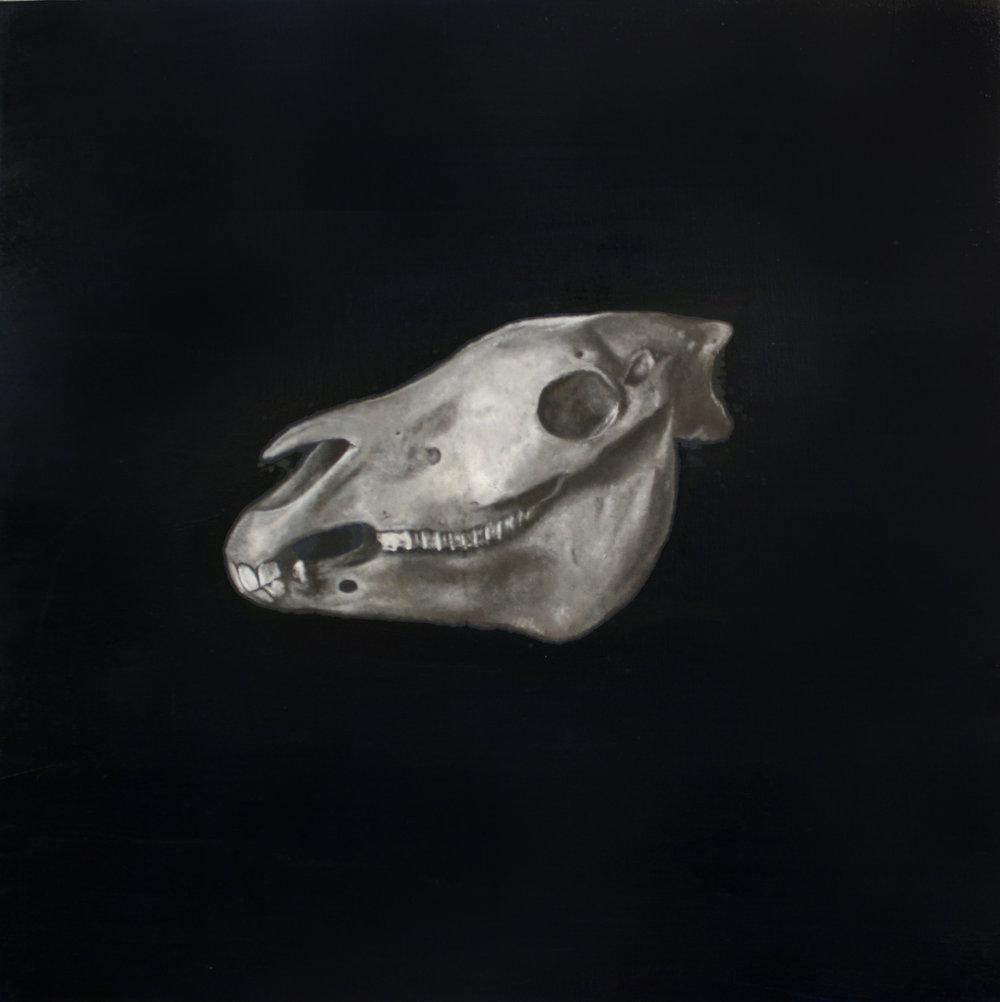 zebra_skull.jpg
