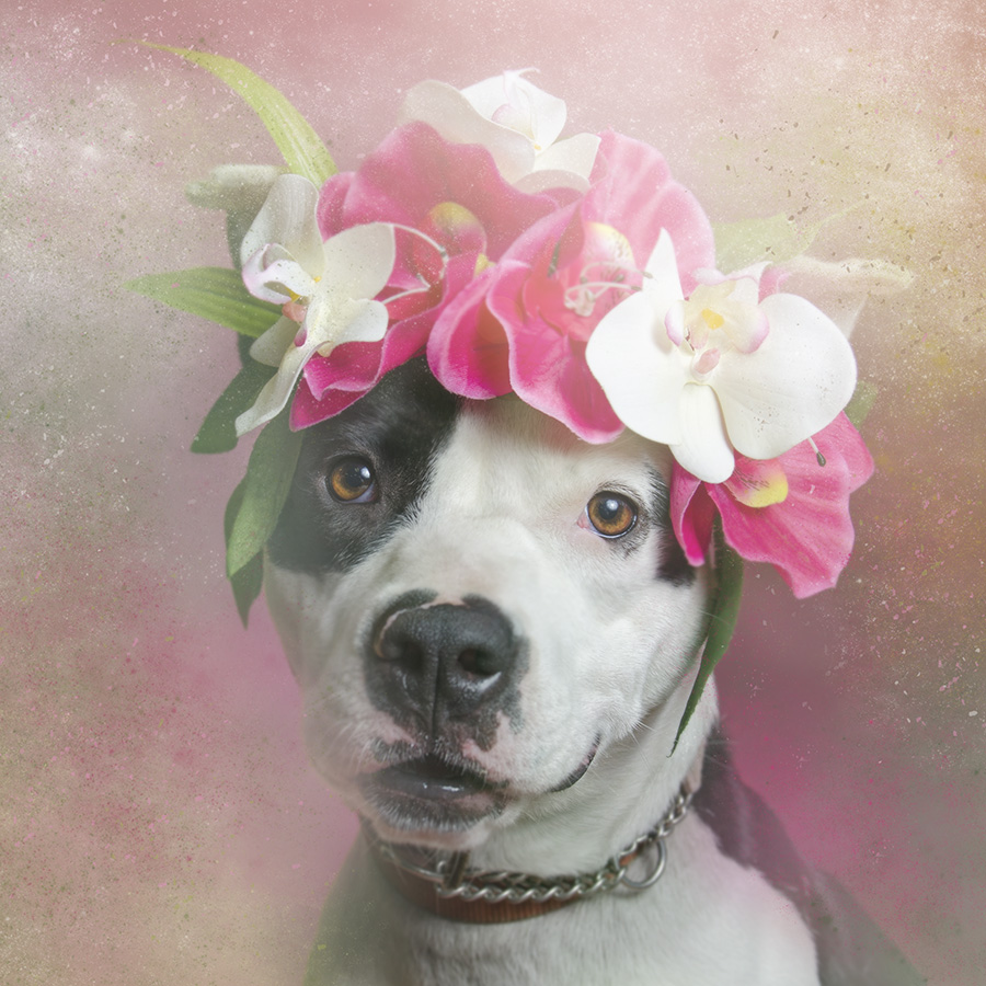 Flower Power Pit Bulls