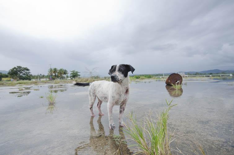Puerto Rican Common Dog Breeds