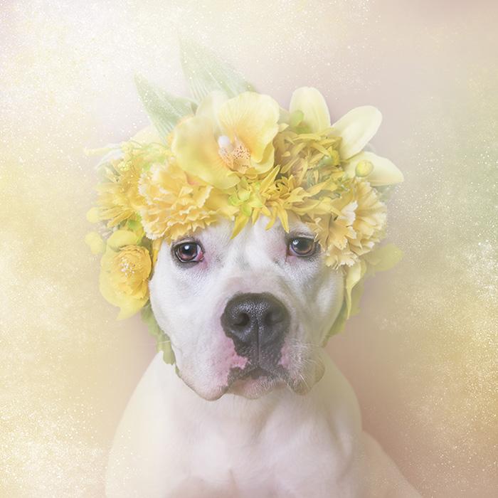 Boss Lady, Brookhaven Animal Shelter (LI)