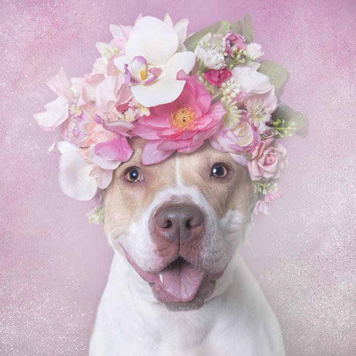 Blossom, Brookhaven Animal Shelter (LI)