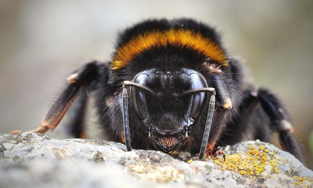 BIOPEST CONTROL.   Soluzioni bio al 100% per i tuoi spazi liberi dagli insetti.