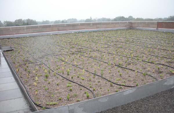 Green Roof - PS118 - Queens NY - Sample 1.jpg