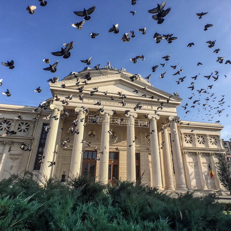 Pigeon Swarm | Bucharest, Romania