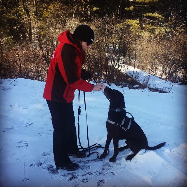 Suzanne & K9 Levi working in all temps this week... #levi #k9 #mainedogs #scentspecifick9 #weworkinsnow #labrador #chocolatelab