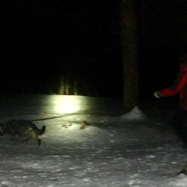 ...because some trainings end a little later. #germanshepherdpuppy #mainedogs #wetrainyousleep #snowinmaine