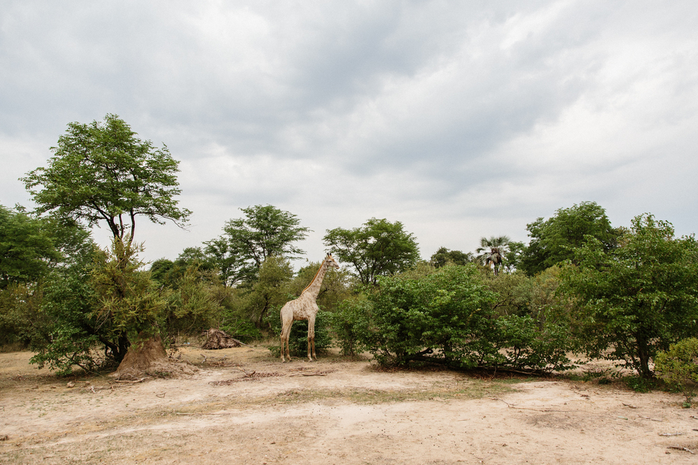 MichaelLiedtke_Zambia151.JPG