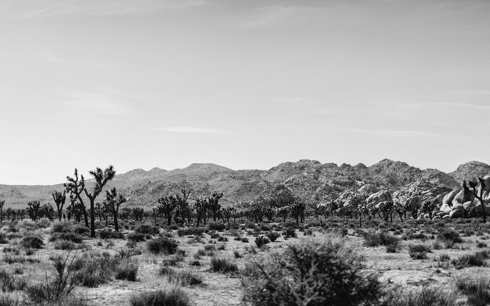 Joshua_Tree_Engagement_Wedding_Elopement_Photogapher_01.jpg