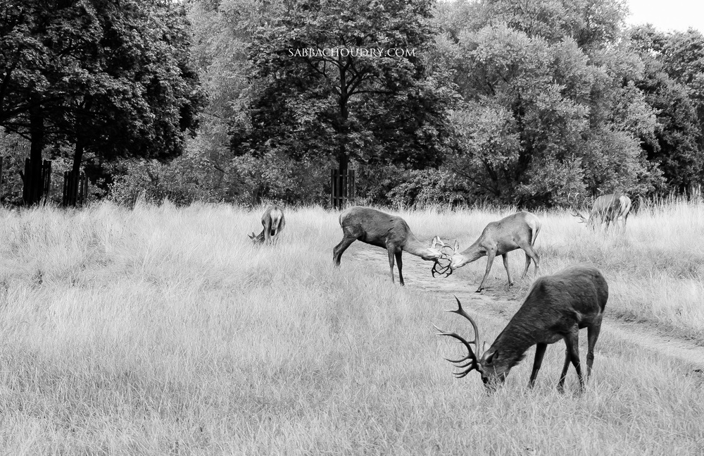 Richmond Park, London, UK