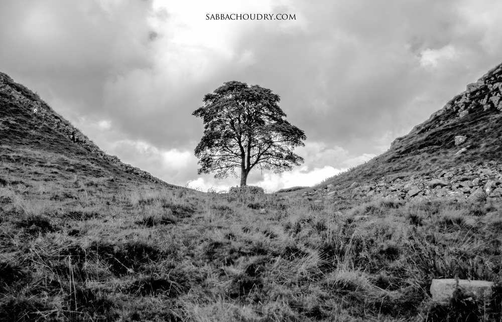 Sycamore Gap at Hadrian's Wall, Northumberland, UK