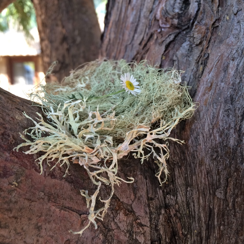 they made nests of fallen lichen + love as offerings
