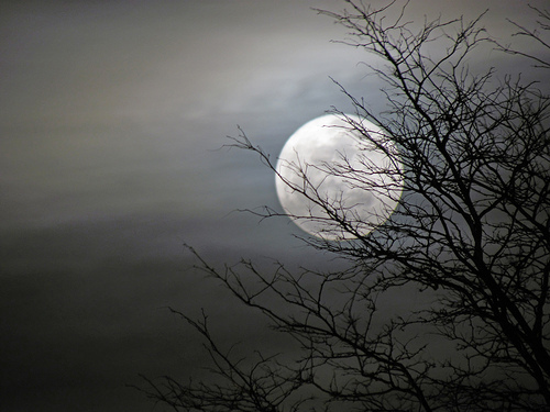 full-moon-on-flickr.jpg