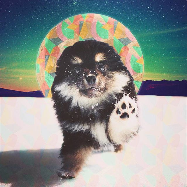 We cosmic-fied this adorable pic by our buddy, the dreamy + handsome @zachallia | As if #Friday couldn't get any better... it's friggin #NationalPuppyDay! 🐶 💕 So go out and hug one (or 8) for us + kick off your weekend with some straight up #Cuteness OVERLOAD, people! 😍 . . . . #nothingisordinary #livefolk #thatsdarling #puppies #connection #diveindeck #connect #conversation #conversations #conversationstarte #connectionrevolution #connect #grateful #cute #adorable #fluffy #dailydog #igdogs #instagood #dog #dogoftheday #dogsofinstagram #puppiesofinstagram