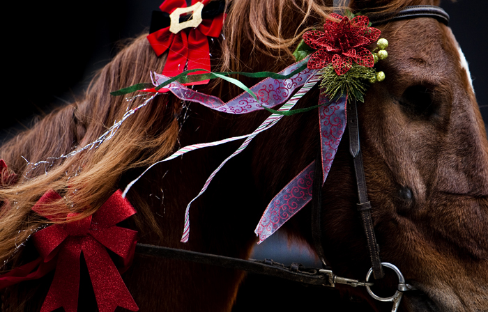 Annie, a one-eyed American Saddlebred with Dream Horse Stables in Mt. Pleasant, makes her way down Main Street during the City of Greensburg Holiday Parade on Saturday, Nov. 22, 2014.