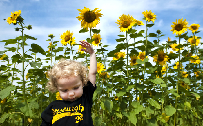 Lily Elkins, 2, of North Huntingdon measures herself against sunflowers at Bushy Run Battlefield in Penn Township on Friday, Aug. 1, 2014. Elkins and her grandmother Kate Zingarelli were watching reenactors set up their camps for Saturday's battle.