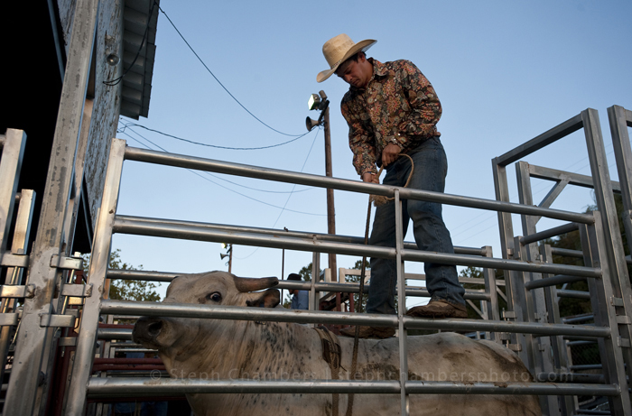 Jesse Swink, 22, of Acme readies a bull before the rodeo during the Bullskin Township Community Fair on Wednesday, Aug. 19, 2015 in Wooddale.