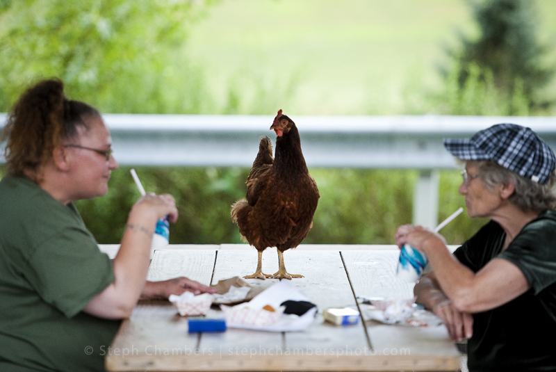 Holly Hayford and her mother Margie Sides, both of Jeannette, wash down their chicken strips with cold beverages as a chicken watches in disbelief on Thursday, Aug. 13, 2015 at Tastyland in Greensburg.