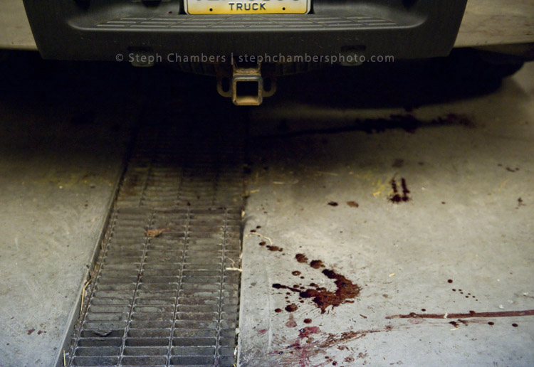All that remains from a black bear processing is blood drippings from the bed of a pickup truck at the Pennsylvania Game Commission Southwest Region Office on Saturday, Nov. 21, 2015, in Bolivar.