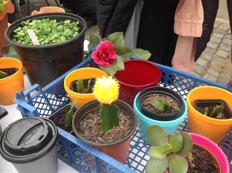 Beautiful Moon Cactus at Granby4Streets Market