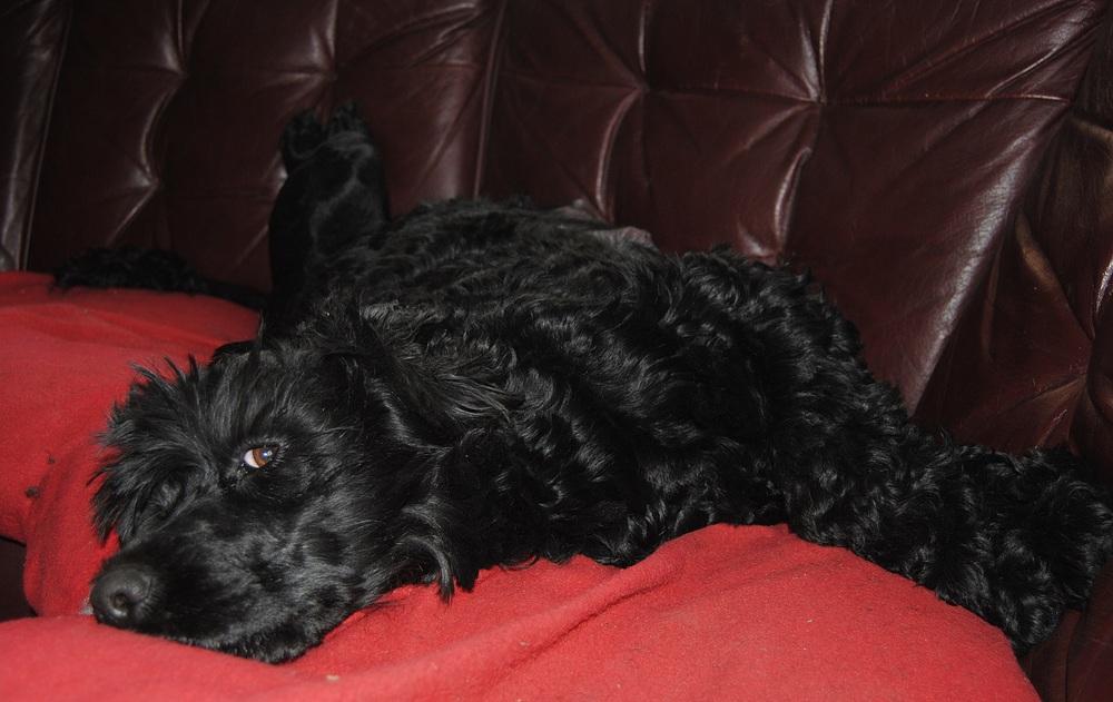 Tea på rygg på sin favoritplats i soffan...