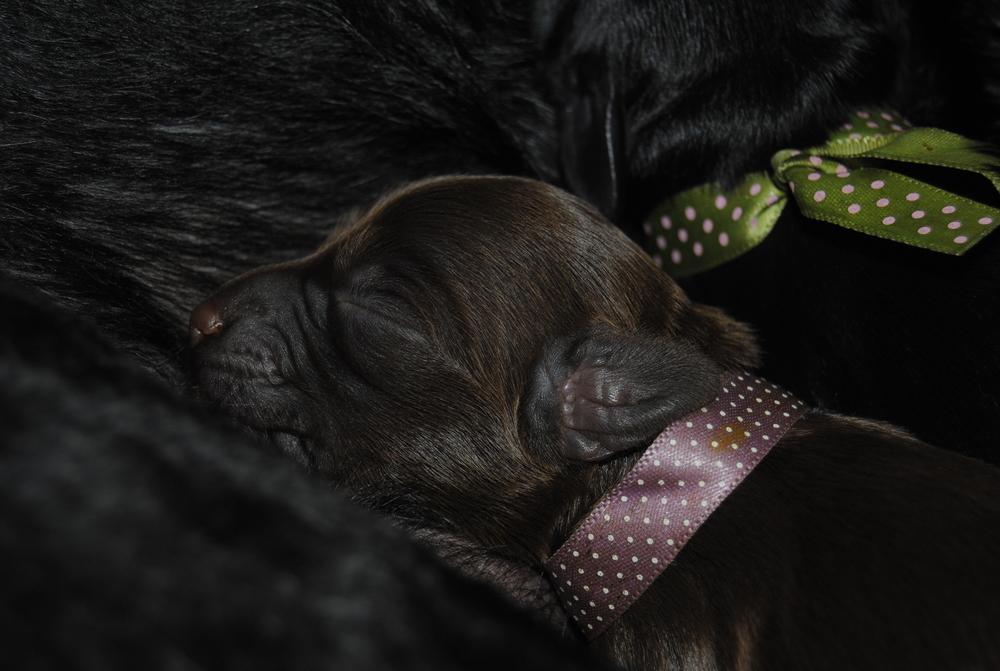Fröken lila sover tryggt nära mamma,