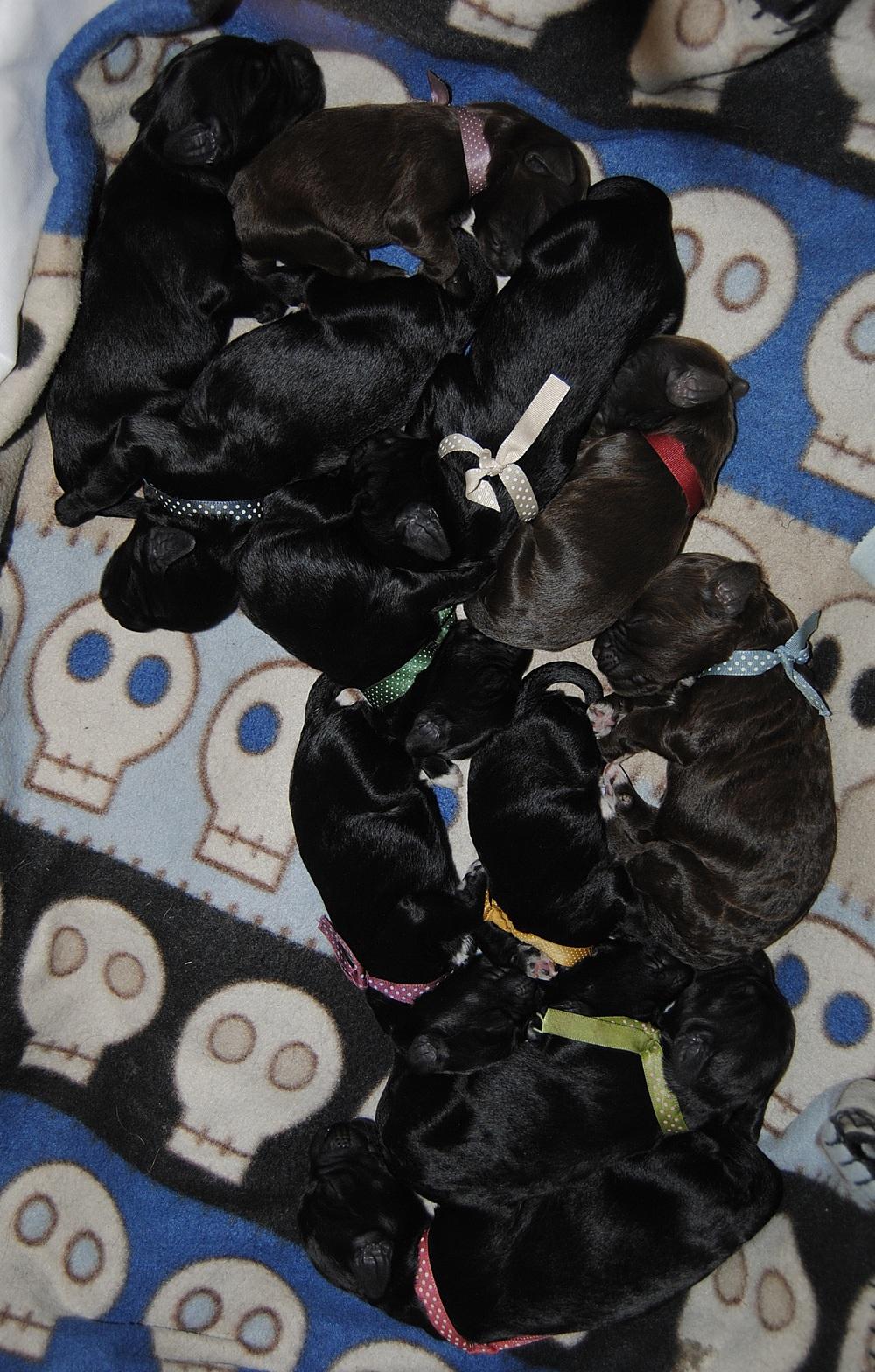 11 trötta och mätta valpar på rad :)