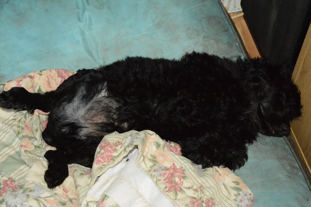 En trött Melvin efter en dag med lek, bad, rengöring, klippning