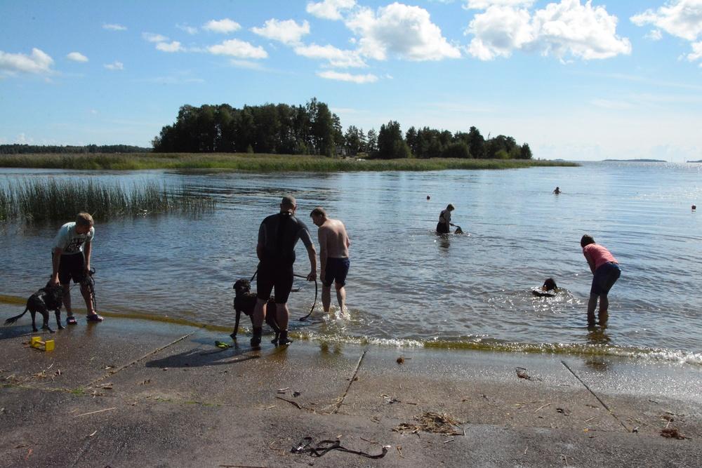 Valpträff 2015/ Puppy meeting 2015